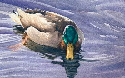 Mr. Mallard: 9×13 watercolour on paper